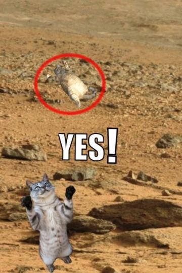 cats on mars 1