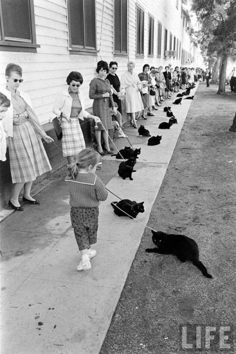 Black Cat, Hollywood Audtions, 1961,