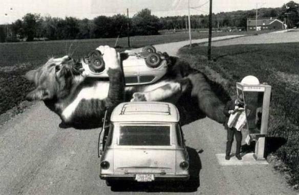 Cat, cars, Cat eat cars, Giant Cat, Godzilla Cat