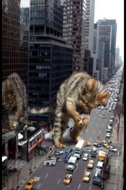 Giant Cat, attacks City, Cat, Godzilla Cat, Tabby cat