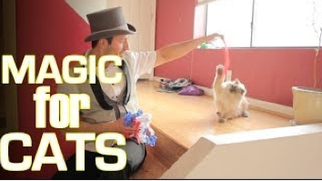 cats, magic tricks, silly, rick lax