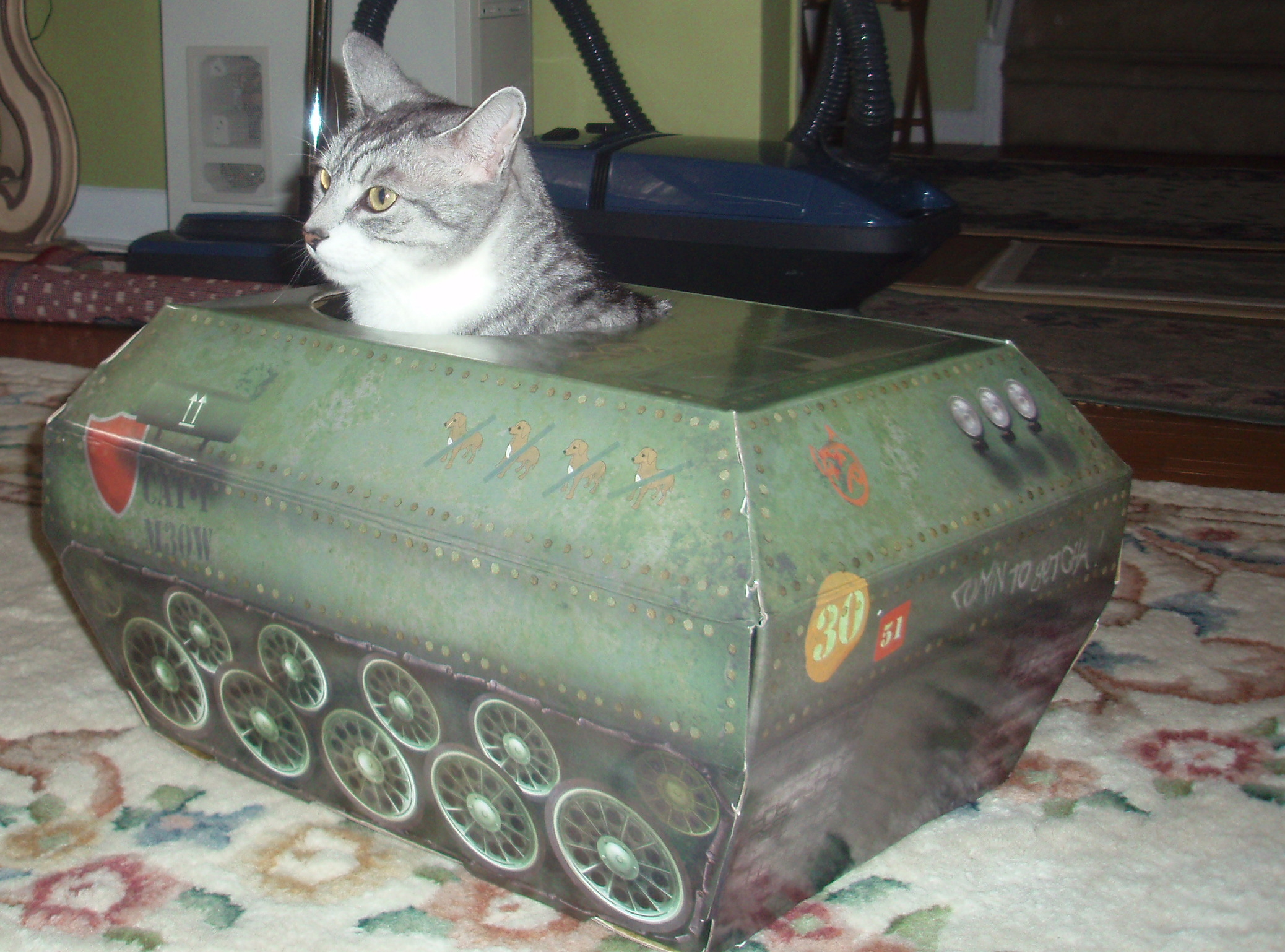 how to make a cat tank