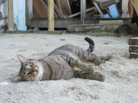 Cats, Belize, PAW Cat sanctuary, Caye Caulker, Madi Collins,