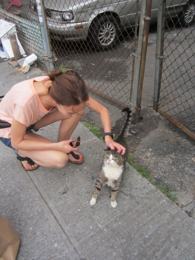 Feral cats, friendly, TNR, Brooklyn, New York, Summer