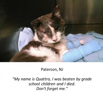 Cat, Quatrro, cat abused, children, New Jersey, May 2014, USA