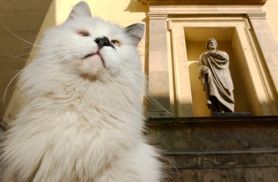 cats,history, Russia, Hermitage museum, art