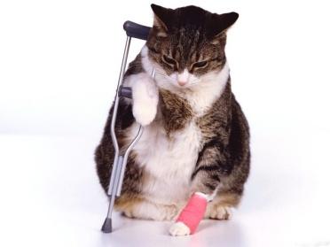 Cats, kitten, Pet insurance, Canada, US, UK