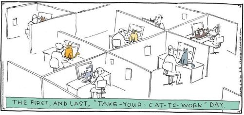 cats, office, work, desk, offic cats