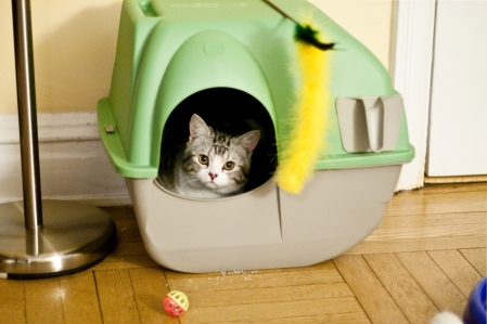 Cats, Kittens, litter box, privacy, scoop once a day, one litter box plus one per cat