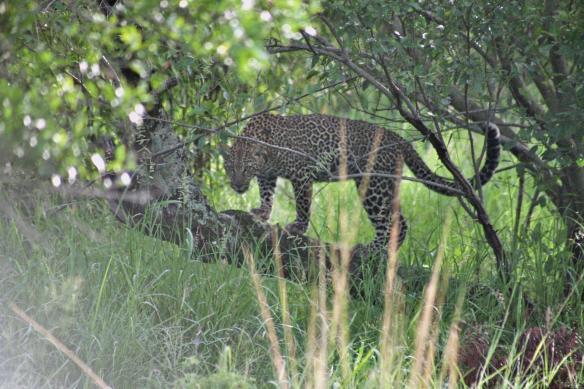 Masi Mara - Kenya - Supu's cub 1