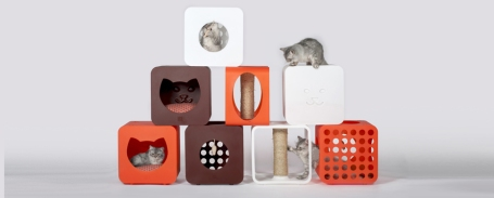 cats. Kitty Kasa, Mango Studio, Arni Foundation USA, Daytona Beach Florida, modules