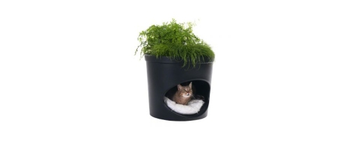 cats, planters, houseplants, pots, cat friendly plants