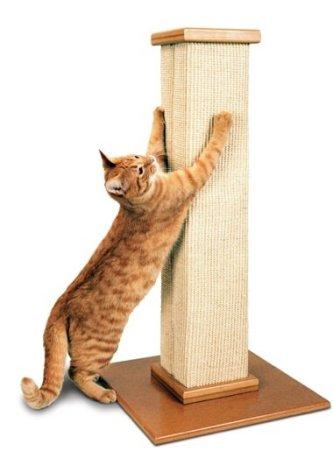 cats, kittens, Using scrtaching post,