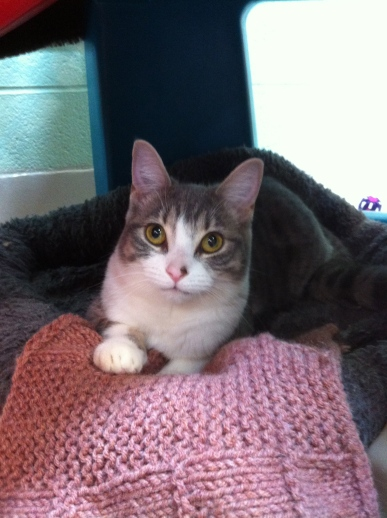 cats, Toronto Animal Serivces, Felie Luekemia, Special needs cats, adopt, rescue,