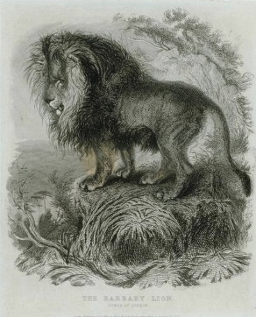 Barbary Lion, Extinct, North Africa Lions, Atlas Lions, Africa, Roman Empire, Gladiators, Collesium, ancient Lions, Lion hunting, World Lion Day