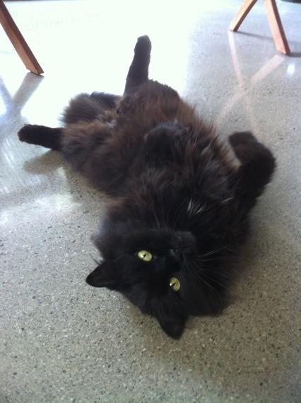 Cats, Black Cats, adopt, rescue, spay, neuter, I love black cats, Black cats are special, Beautful,
