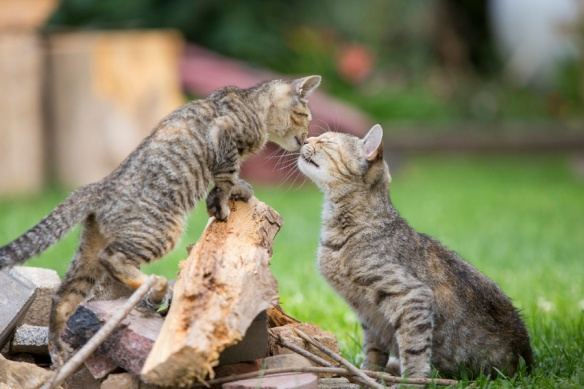 Cats, Kittens, Feral Cats, Stray Cats, Homeless Cats, Photography,  Jason and Elizabeth Putsche, Photgraphers For Animals, TNR, Alley Cat Allies, Community Cats, Documentary, animal rights, Helping cats, Animal Shelters, Rescue, Adopt, Spay, Neuter, Compassion for cats