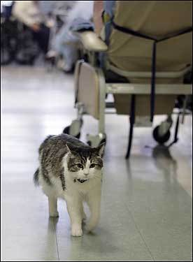 cats, making rounds with Oscar, Cat who predicts death, dementia patients, life lessons, cats as teachers, cats bring comfort to dying patients, pet therapy,