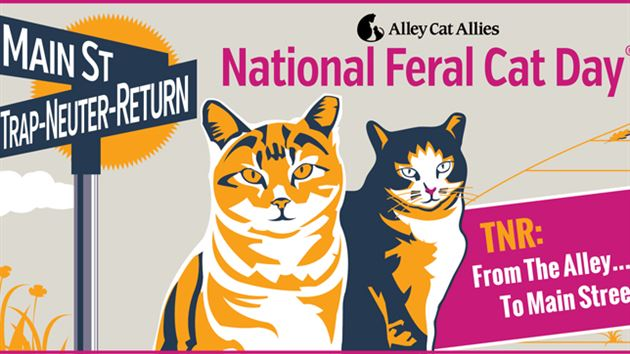 cats, kittens, feral cats, Alley Cat Allies, TNR, Trap-Neuter-Release, stray cats, October 16, Spay, Neuter, Volunteer with cats, community helping animals, Compassion for cats, Feral Cat Day Toronto, Toronto Humane Society, Toronto Cat Rescue, Garrison Ferrals,