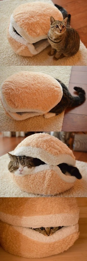 cats, kittens, cat beds, Maru the cat, Japan, cozy cat beds, home wear,