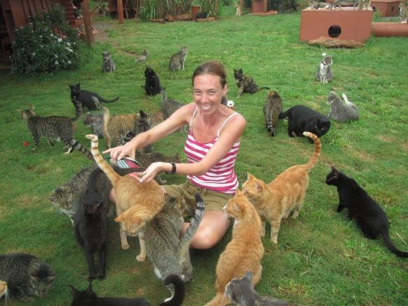 cats, Kittens, Hawaii, Hawaiian Islands, Lanai, Lana Animal Rescue Center, LARC, stray cats, Kathy Carroll, Travel, Volunterring in Hawaii, Adopt cats in Hawaii, cat paradise, cat rescue in Hawaii