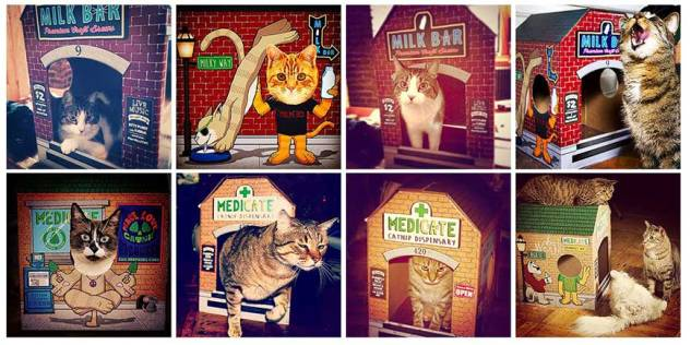 cats, boxes, kittens, cat houses, Meowses, Awesome Cat Houses, Kickstarter, Smokey The Cat