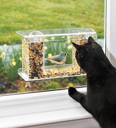 cats , kittens, birds, bird feeder, indoor cats, keep birds safe, Great Cat Products, Wind & Weather, windows