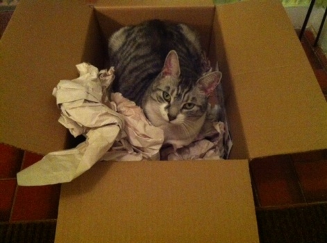 cats, boxes, kittens, cat houses, silver tabby, Meowses, Awesome Cat Houses, Kickstarter,