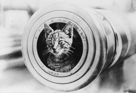 cats, cats in wartime, remembrance day, famous cats of war, history
