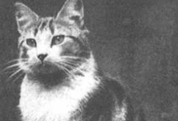cats, cats in wartime, remembrance day, famous cats of war, history, animals of war