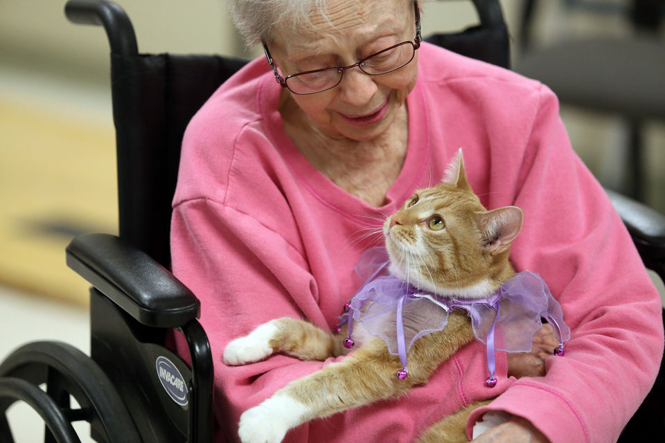 Can cats be trained what are the benefits of training cats