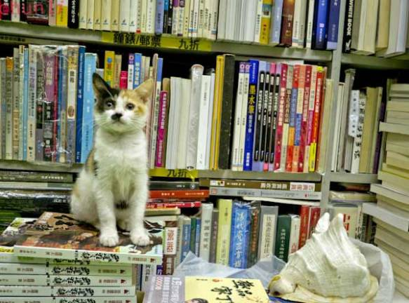 cats, kittens, bookstores , bookstore cats, Hong Kong, Sam Kee Book Company, Saving homeless cats, Community helping cats, Travel,