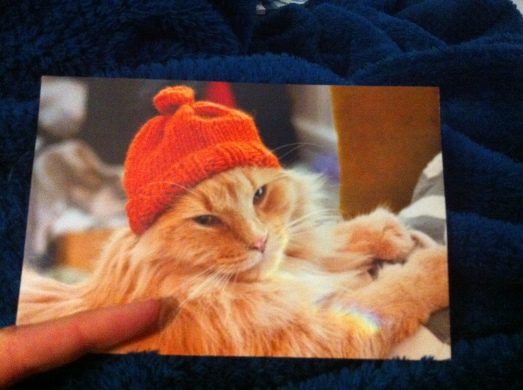 Tsuki, Cats at the Bar, Cat Blogs, Canadian Cat blogs, Orange Tabby Cats, Tsuki Whisker Counter Winner, t shirt contest, Purr and Roar, cats, rescue cats,