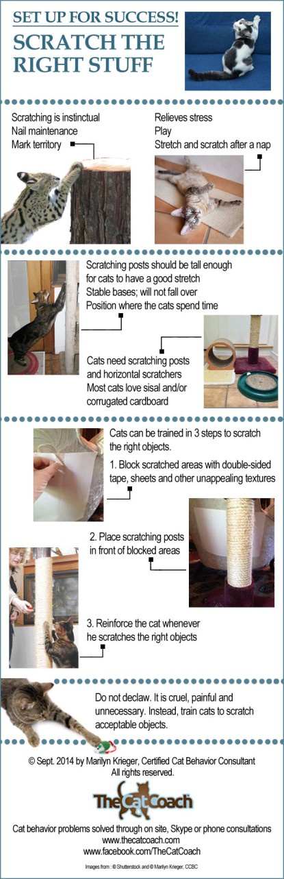 cats, declawed cats, tabby cats, Adopt don't shop, Cat rescue, Toronto, Toronto Animal Services, animal shelters, Don't Declaw cats, The Paw Project, Humane alternatives to declawing, must love cats, Ban declawing, Info graphic, Train cats to scratch the right stuff, The Cat Coach,  Soft Paws