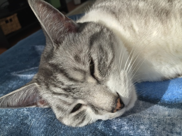 cats, Cats of instagram, Silver Tabby, Rescue cats, Cats napping, A cats life, Cats make everything better, Tuesdays Cats, Purr and Roar, Cat Telepathy