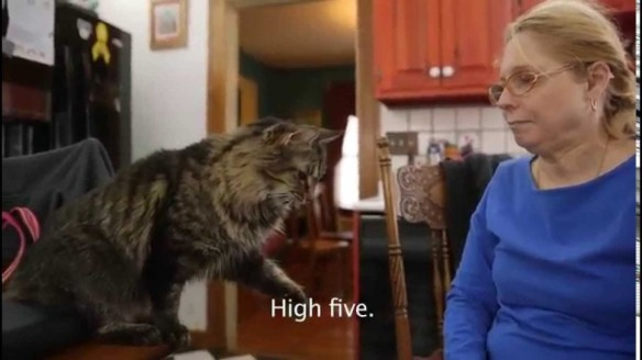Cats, Cat Sign Language, Animal Sign Language, Cats Know Sign Language, Cat Sign Language Video, Deaf Cats, Kim Desilva, Training a Cat, Special Needs Animals, Special Needs Pets, Special Needs Pet Adoption, Sign Language for Animals