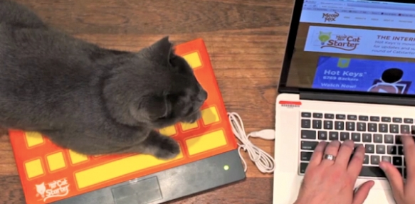 cats, USB Keyboard, Meow Mix, Cat beds, Catstarter Hot Keys, Innovative Cat products, cats and keyboards, keep cats of your keyboard, USB cat bed, cats and Technology, cats like to type
