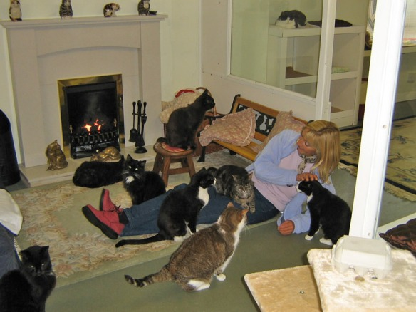 Cats. Retirement home for cats, Estate Planning, Plan for pets after you die, UK, Lincolnshire Trust for Cats, Taking care of your cat when you can't, village of Osgodby, Cats are family, Ensure cats are cared for after you die