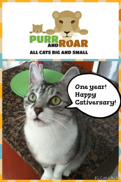 Purr and Roar All Cats Big and Small, 1 year anniversary, Cats, Kittens, Lions, Tigers, Leopards, Cheetahs, Ocelots, Jaguars, Wild Cats, Big Cats, Domestic Cats, SIlver Tabby, Blog about cats,