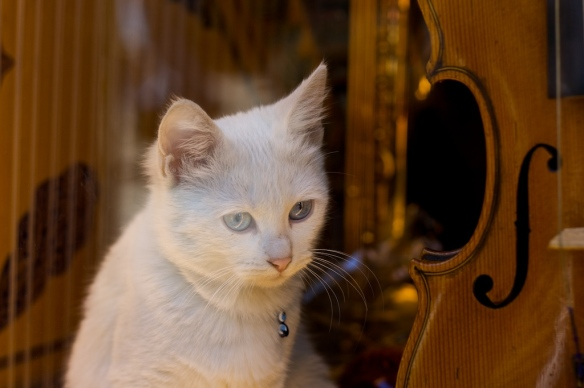 cats, kittens, music, cats don't like human music, cats like species specific music, Music for cats, David Teie, Composer for cats, Music composed for cats, Music to sooth the feline soul