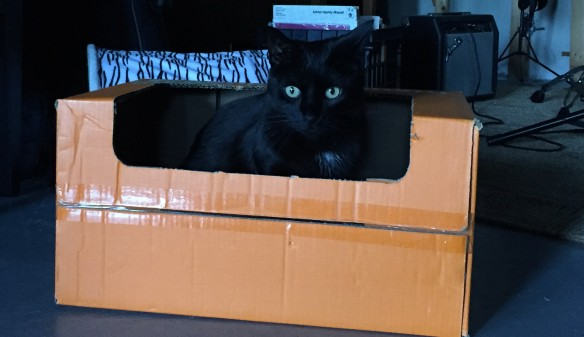 cats, black cats, cats and boxes, cats in boxes, orange boxes, cat sitting, wordless wednesday, cats of the internet, black cats are awesome, i love black cats,