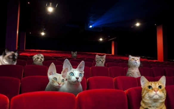 Cats, Kittens, Cat Cafes, UK, London, Great Kitten, Cat cafe and cinema, Cats at the Movies, Worlds first Cat Cinema and Cafe, Cat adoption, homeless cats in the UK, Promoting Cat Welfare