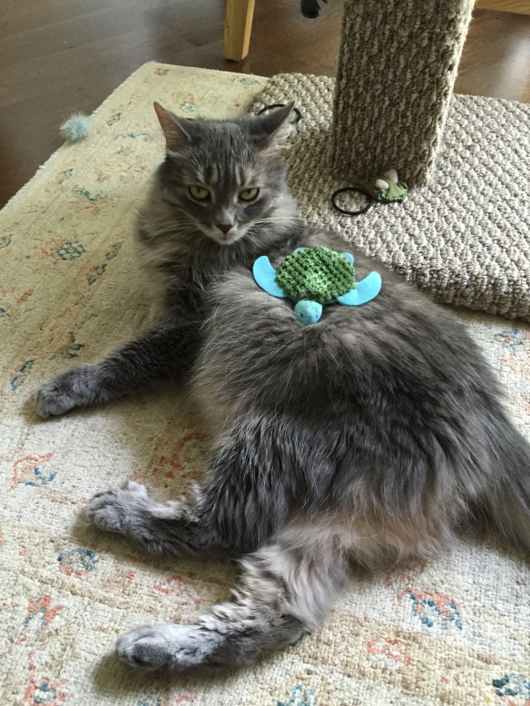 Grey Tabby cats, Cats of the internet, cat sitting, Purr and Roar, Medium hair grey tabby cats, tabby cats, rescue cats,