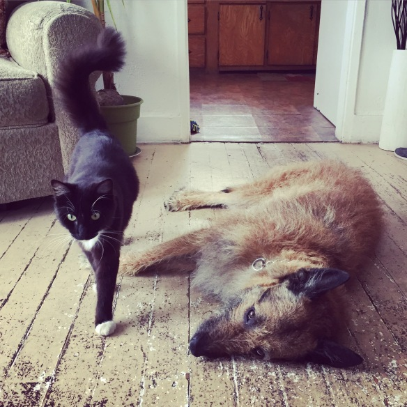 Cats, cats from around the world, Cats in LA, CatConLA, Air bnb, black and white cats, cats and dogs, cats and dogs are friends, cats best friend is a dog, life is better with pets, cats a