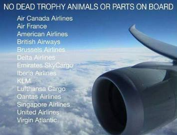 Major airlines ban trophies, Africa, British Airways, Iberia, Air France, KLM, Ethiopian Airline, Qantas,Emirates Airline, Etihad Airways, Qatar Airways, Singapore Airlines, Brussels Airline, Delta, Cecil the Lion, Cecil, RIP Cecil, the Cecil Factor, Zimbabwe, Africa, Lions on the verge of extinction, Save Lions, Ban trophy hunting, Ban canned hunting, Hwange, Hwange National Park, Walter Palmer, US trophy hunters, Major Airlines ban animal trophies,
