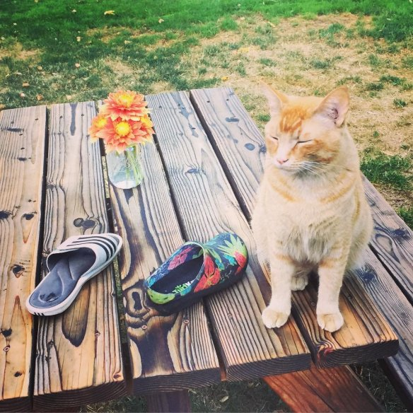 cats, Snorri the cat, Portland, Oregon, The cat burglar who steals shoes, the cat who steal shoes, Orange Tabby cat, Snorri Sturluson, cats who steal footwear, Cats of the internet