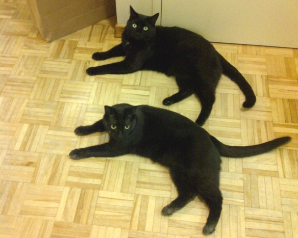 black cats, cat rescue, Cats in Toronto, Adopt dont Shop, Caturday, Cats Are Family, Little Lions, Cats of the Internet, Lets Talk About Your Cat, Purr and Roar, Caturday, Black cats are awesome, Toronto Cats, Adopt black cats, Cats as teachers,