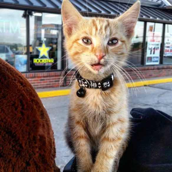 Cats, Cat Rescue, Cat men, Party Cat, Biker who rescued kitten, biker and sheetmetal worker Pat Doody, orange tabby, compassion for cats,