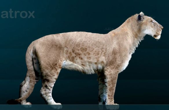 Smilodon Fatalis, Smilodon populator, Smilodon Gracilis,Panthera Atrox, American Lion, Giant Jaguar,Smilodon, California fossils, Prehistoric big cats, extinct cats, Saber-tooth Cat, Saber-tooth Tiger, Fossils, science, Pleistocene, La brea tar pits,