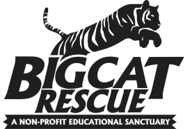 Big Cat Rescue, charities, Cat Charities, Christmas donations, giving back, helping cats, Wild Cats, Lions, Tigers, Leopards, Cheetahs, Pumas, Panthers